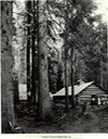 logging camp with tall spruce