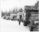 winter line of 50's trucks with 4' wood